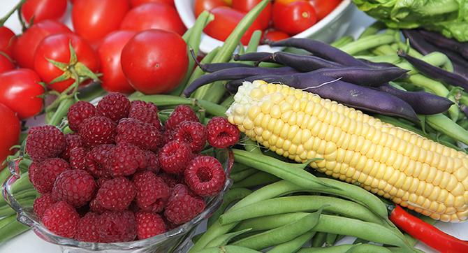 I august er der masser af tomater, bønner, de første majs og søde efterårshindbær.