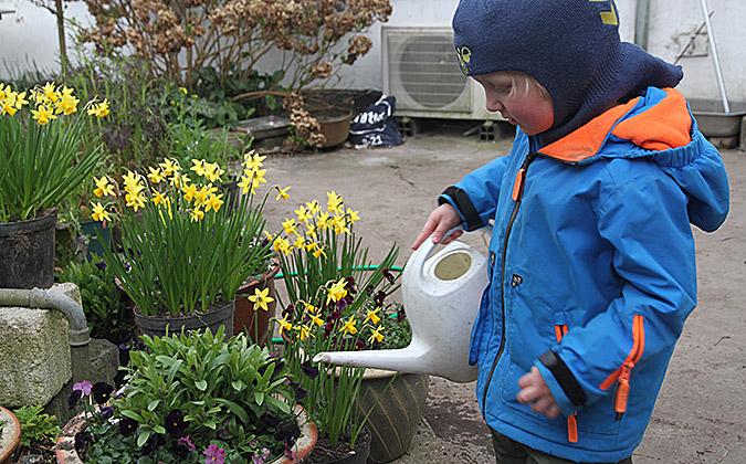 hornvioler og forglemmigej i krukker i gården