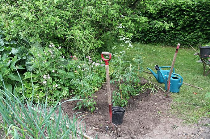 Der er plantet fire stk. Favorita - og så er der plads til chili eller basilikum.