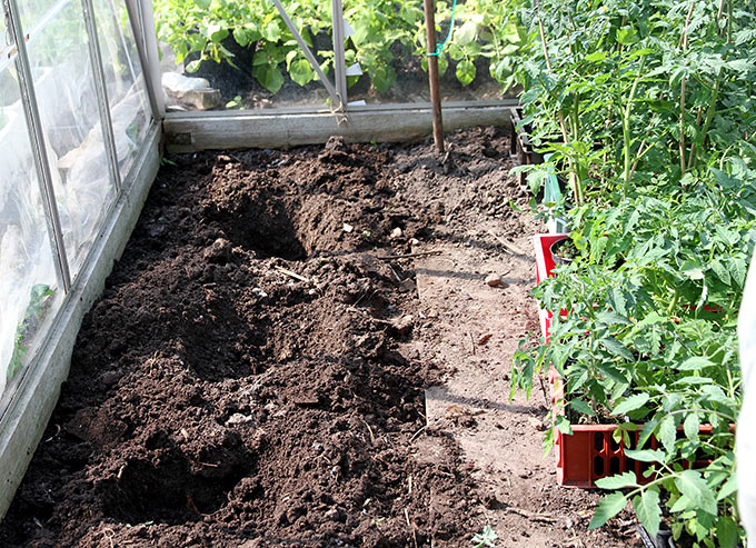 Jorden hvor tomaterne stod sidste år graves op.