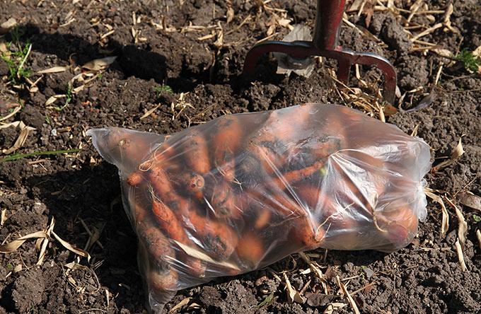 En stor pose gulerødder af fin kvalitet.