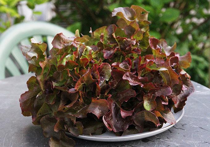 Værsgo - en tallerken salathovede