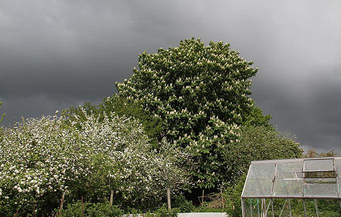 Overskyet vejr og blomstrende frugttræer.