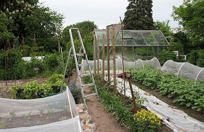 Tomaterne er plantet og pælene banket ned.