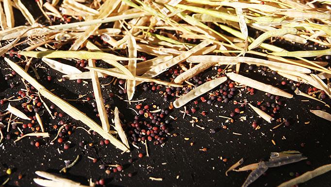 frøhøst
