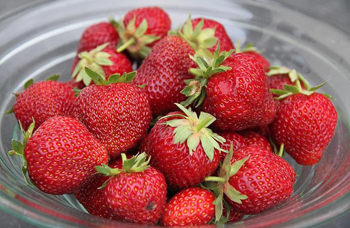 Dagens høst af store flotte jordbær.