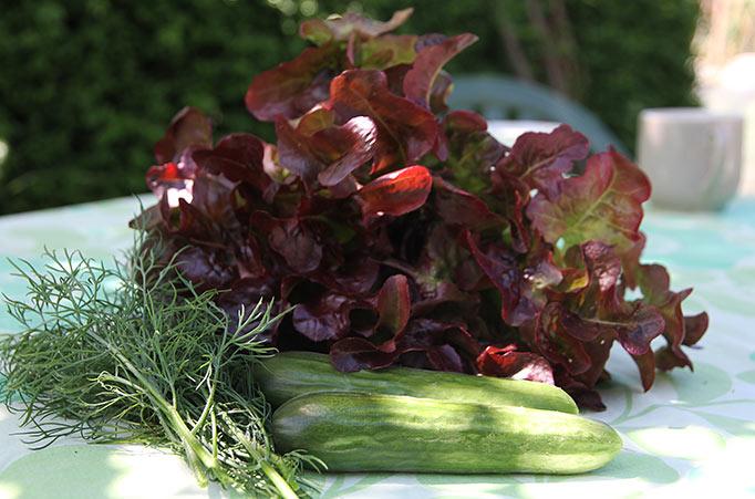 dild, salat og to agurker til frokosten.
