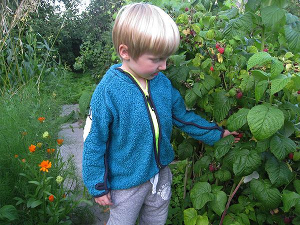 Lige inden sengetid går vi en haverundtur og spiser en masse hindbær
