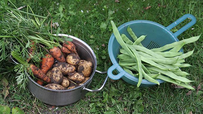 Så er der grønsager til aften til tre personer. Og der blev kun levnet 3 kartofler.