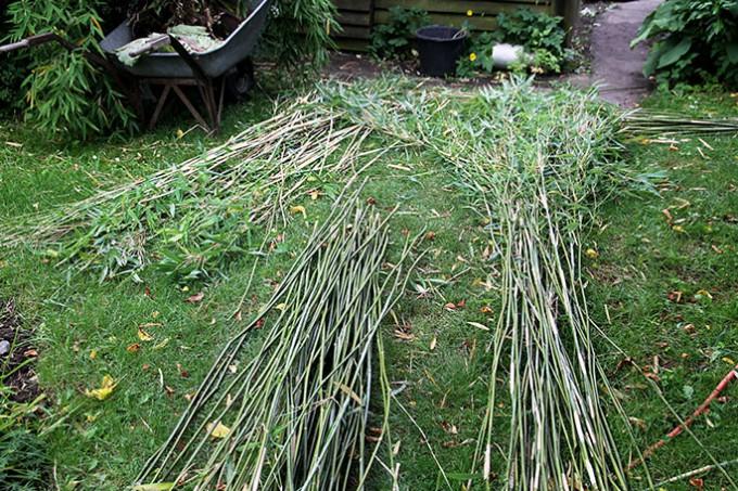 Jeg sorterer den høstede bambus efter længde.