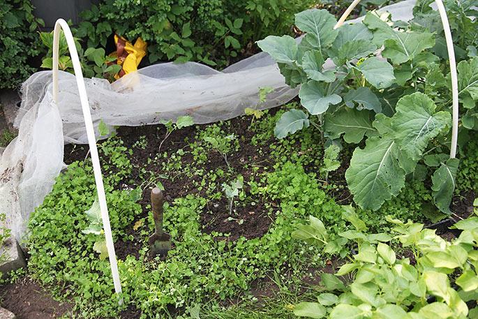 De små planter fylder ikke meget - de er sået 2 måneder senere end de store planter.