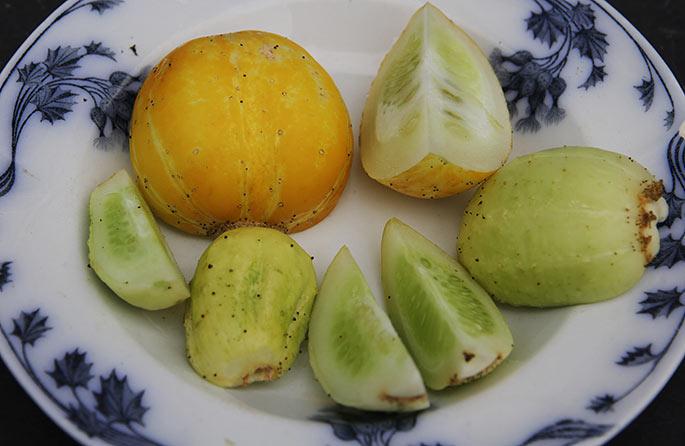 Den store gule citronagurk er flot, men for stor til at spise.