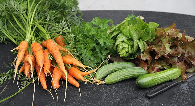 Lidt af dagens høst: Gulerødder, persille, to slags salat, agurker.