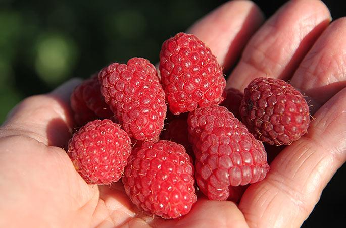 En håndfuld hindbær