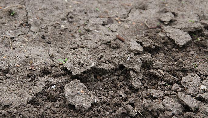 Kompakt jord efter skybrud - det kunne også være efter gentagne vandinger.