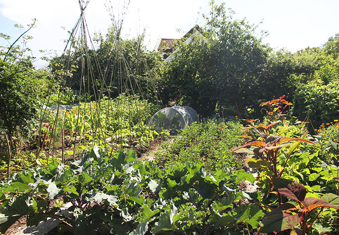 Køkkenhaven midt i haven med selleri, bønner og blomsterkål.