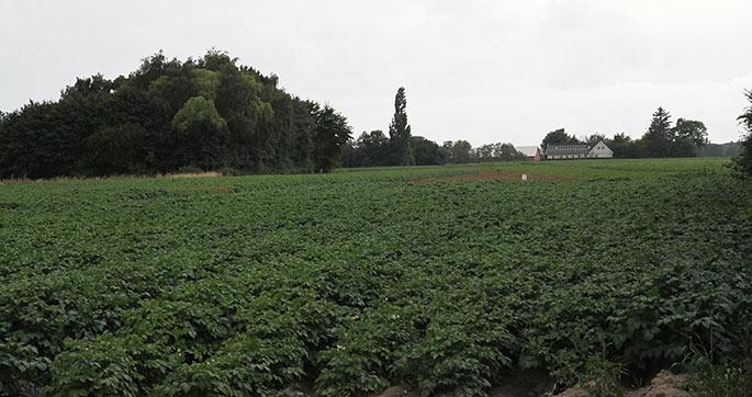 En lille del af nabolandmandens store kartoffelmark.
