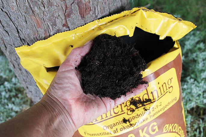Komposteret hønsemøg til jordbærbedet.
