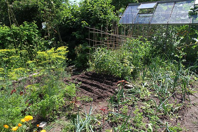 Køkkenhave med løgbed