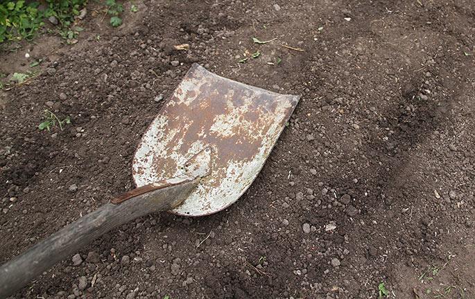 Jeg klapper jorden med bagsiden af en skovl for at skabe god jordkontakt.