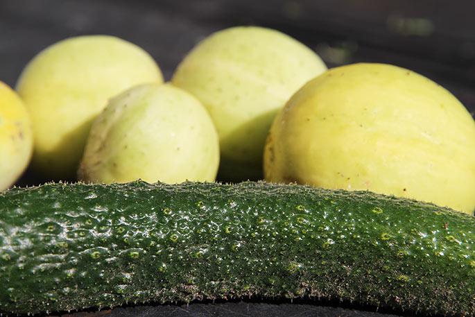 kinesisk slangeagurk og citronagurk