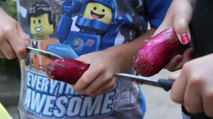 Røde kartofler skrabes