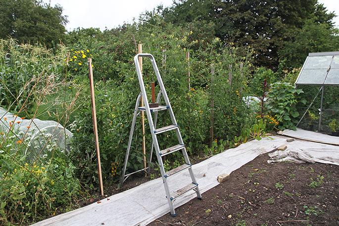 Nye pæl til tomatplanter.