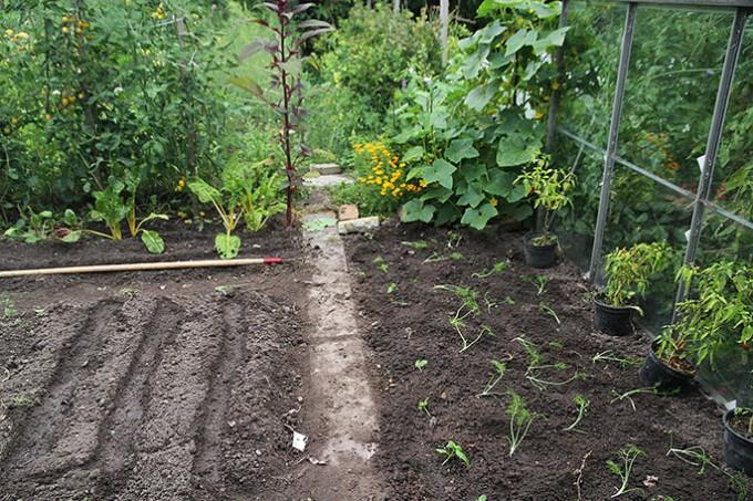 Her er plantet knoldfennikel og dild ud og der er såriller klar til at så salatfrø i.