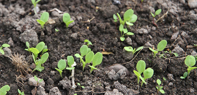 God fremspiring af salat