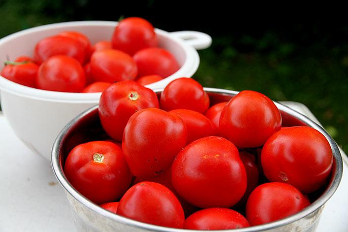 Store flotte modne Bell Star tomater.