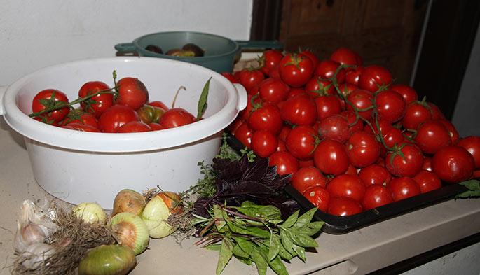 Her er tomater til at fylde en stor gryde med.