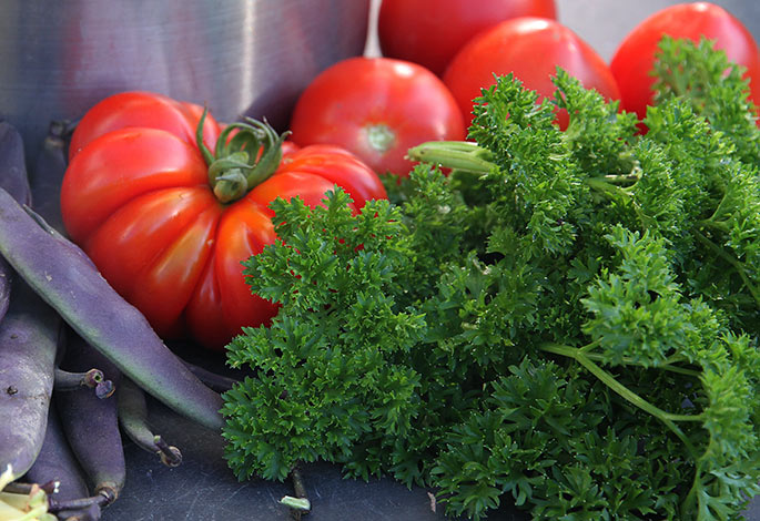Costoluto Fiorentino tomaten sammen med persille - det er da smukt