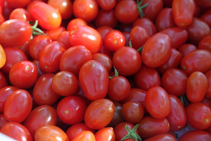 Masser af røde cherrytomater til at tørre.
