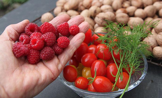 En håndfuld hindbær og en skål tomater i oktober.