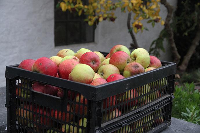 n kasse flotte Jonagold æbler.