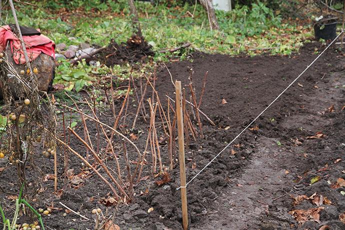 Godt 3 timer senere er bedet ryddet og klar til at plante hindbær i.