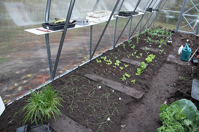 Der er plantet ud i hele den ene side af drivtunnelen.