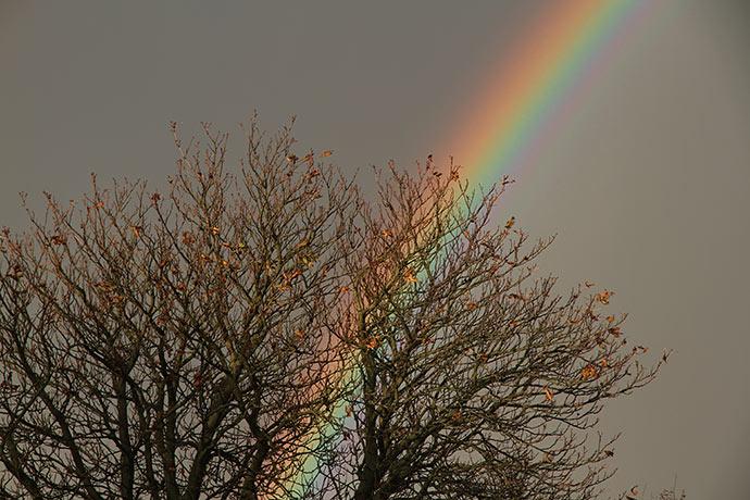 Regnbue bag kastanjetræet, som kun har få blade tilbage.
