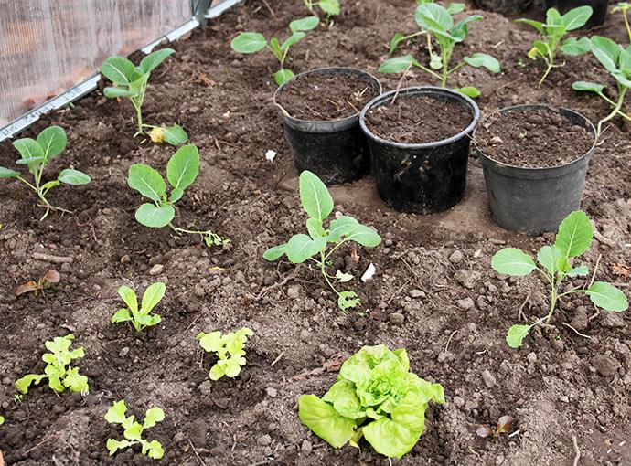 lys til planter amazing fleur de lys planter tray pack. Black Bedroom Furniture Sets. Home Design Ideas