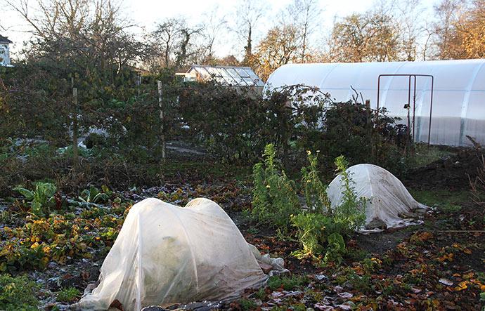 Drivtunneler i flere størrelser, som beskytter planter mod frosten.