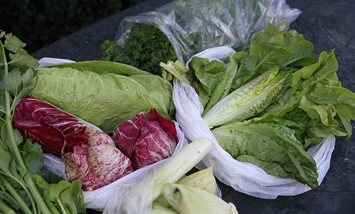 Resten af salaten er blevet høstet.