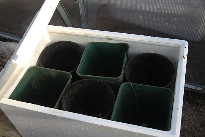 Sættekasse til kartofler - når frosten er ovre.