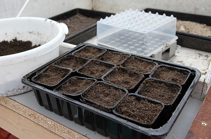 De første potter er fyldt med god hjemmelavet såjord.