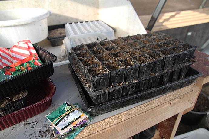 Rootrainer er fyldt med jord til at spidskål i.
