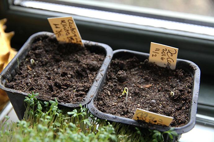 De blev lige foreløbig stillet i vindueskarmen. I morgen skal der etableres vækstlys.