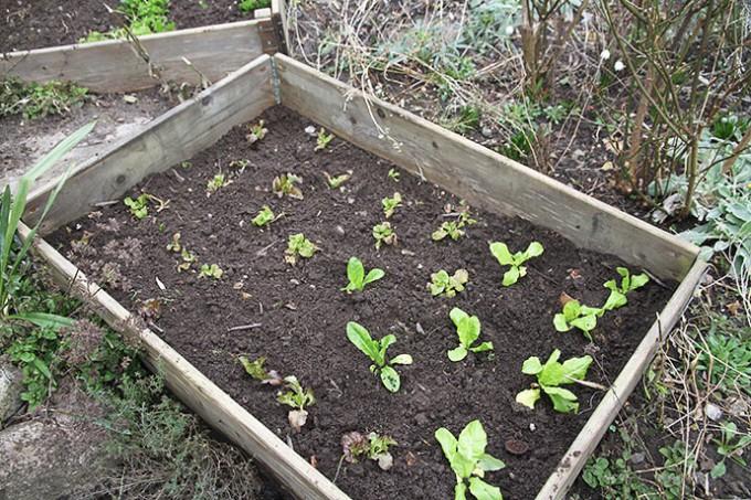 Spændende om planterne fra drivtunnelen klarer udplantningen til det fri.