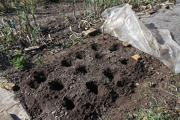 Så er der gravet huller i forbandt. Murstene i bedet er markeringer, så jeg ved, hvor jeg kan begynde at lægge næste hold.