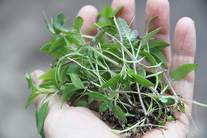 Små planter, hvis liv slutter som kompost.