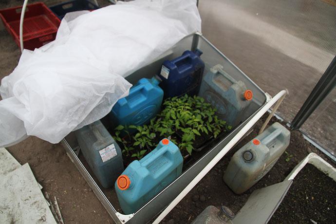 Der blev stillet 5o l lunkent vand ind til planterne.