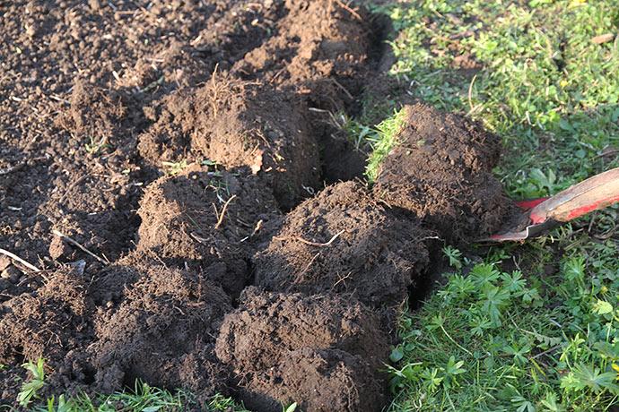 Græsplænen graves op ved at vende græstørven ned.